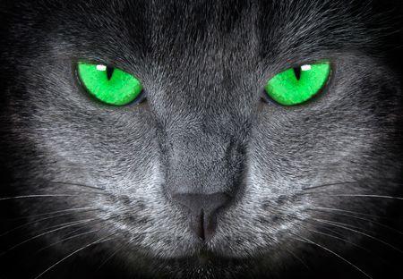 grey cat          版權商用圖片