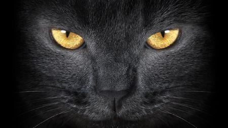 gato negro: gato gris  Foto de archivo