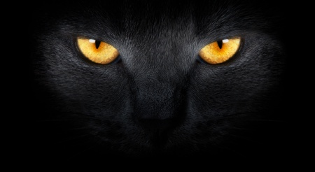 black cat: View from the darkness. muzzle a cat on a black background.