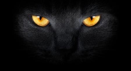 gato negro: Vista desde la oscuridad. amordazar a un gato sobre un fondo negro. Foto de archivo