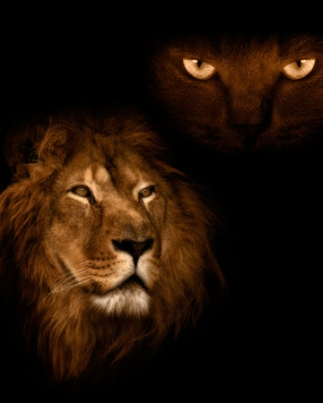 View from the darkness. Lion on a black background. Stock Photo