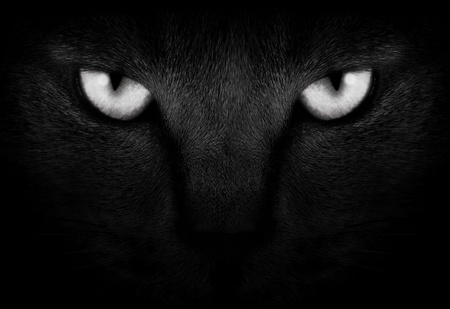 View from the darkness. muzzle a cat on a black background.  Stock Photo