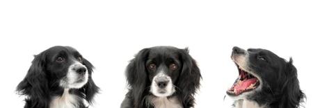 dog on a white background Stock Photo - 10690488