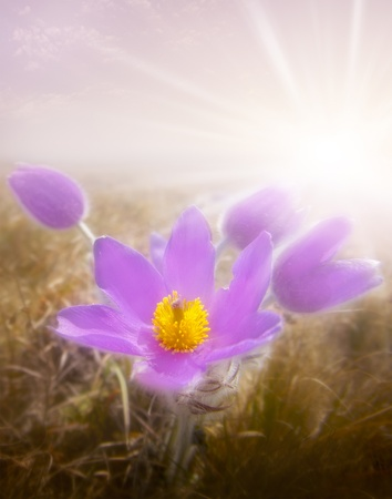 flower and sun