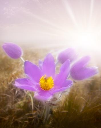 flower and sun          photo