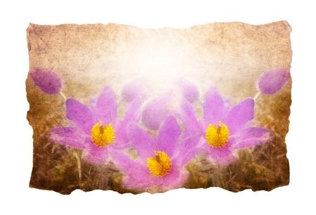 flower manuscript Stock Photo - 10690493