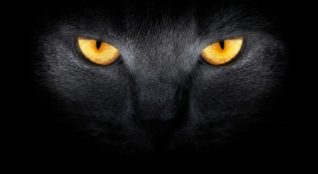cat Stock Photo - 15206590
