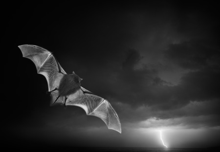 Bad on the storm  photo