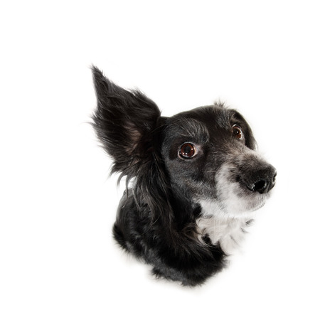 big dog: This is a black dog on a white background Stock Photo