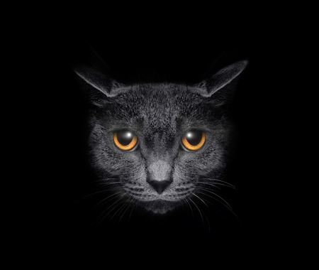 View from the darkness. Muzzle a cat on a black background. photo