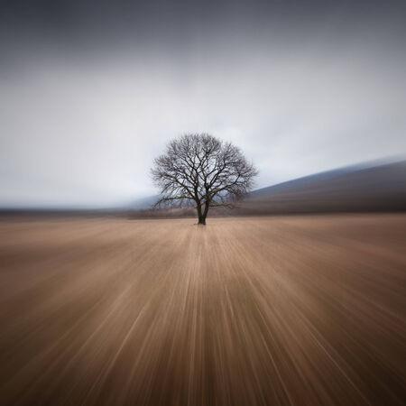 horizon over land: Tree and storm Stock Photo