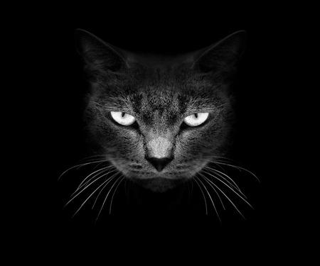 Muso di un gatto su un nero. Archivio Fotografico - 30824093