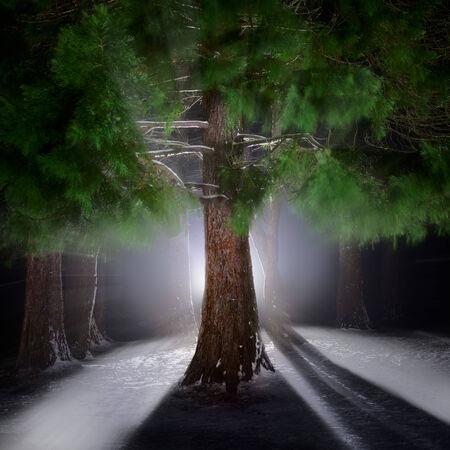 hristmas: Beautiful сhristmas forest. Stock Photo