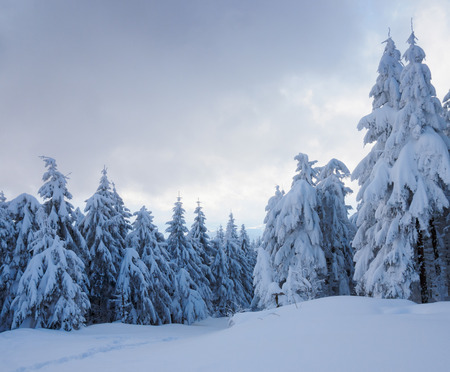 Beautiful winter forest, which I photographed in the mountains photo
