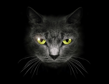 Muzzle a cat on a black background. Stock Photo