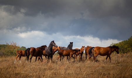 Wild horses. Landscape, an autumn wood on a background of the cloudy sky. Imagens