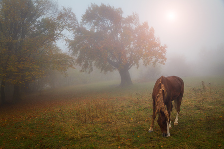 Wild horse. Autumn landscape, an misty forest and sun. Imagens