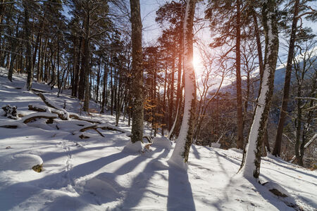 snow scenes: Winter misty landscape with mountains and forest. Stock Photo