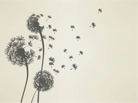 overblown: Dandelion  Illustration