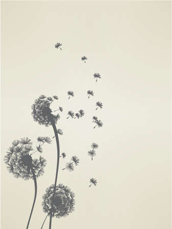 dandelions: Dandelion