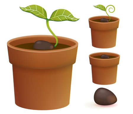 growing plant: Plant Life Cycle