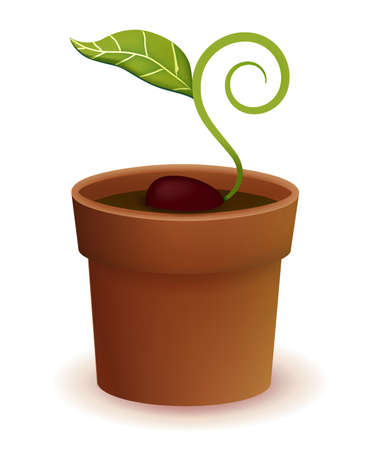 Plant Life Cycle   Vector