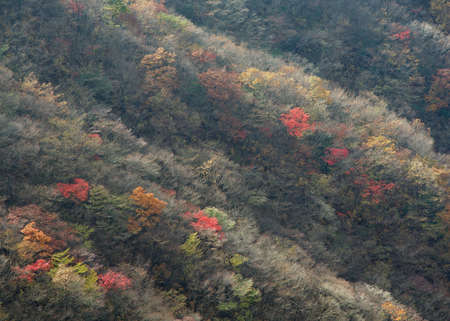 scenary: Scenary of skirts of mountain covered with autumn leaves.
