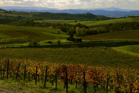 Countryside in Autumn with the vineyards showing red and yellow leaves - Montalcino -Tuscany - Italy Banque d'images