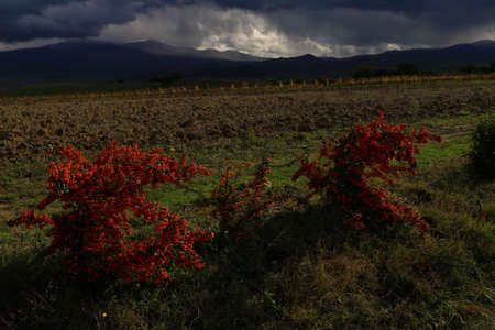 Landscape of vineyard in autumn before a storm - Montalcino - Tuscany - Italy Banque d'images