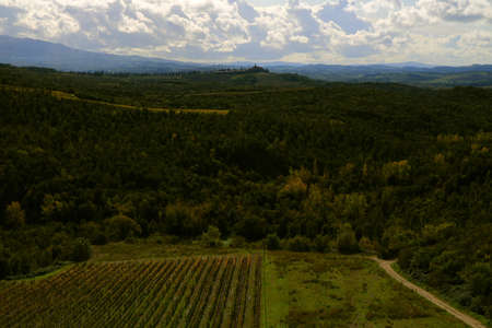 Landscape in Autumn with a vineyard in the bottom of the valley and a castle on the top of the hills in the background - Montalcino - Tuscany -Italy