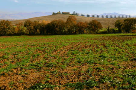 Characteristic row of cypresses in the Tuscan coutryside in Autumn - Tuscany - Italy