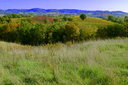 Countryside in Autumn showing the vineyards with red and yellow leaves - Maremma - Tuscany - Italy