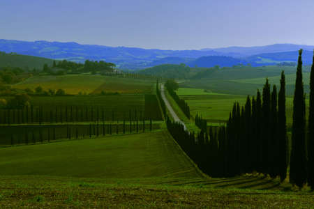 Countryside in Autumn showing the vineyards with yellow leaves - Maremma - Tuscany - Italy Banque d'images