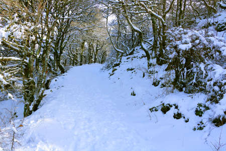 Snowy trail up to the top of Monte Labbro with deciduos trees in the sides - Grosseto - Tuscany - Italy Banque d'images
