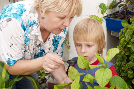 grand kid: The grandson and grandmother Studying a plant