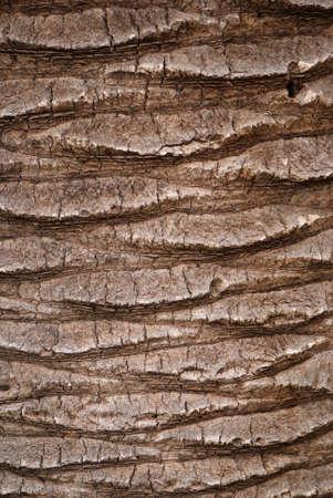 bark of palm tree:  Palm tree bark texture  Stock Photo