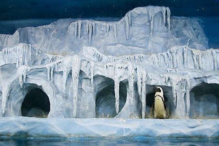 oceanarium: Penguin in the Moscow Oceanarium