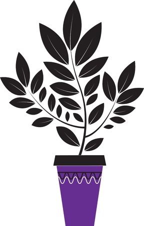 houseplant in the purple spot