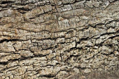 olive tree olea europaea detailed texture trunk Stock Photo
