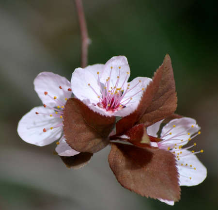 floral spa wellness almond flowers in nature photo