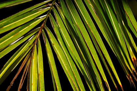 subtropical palm tree light efect in summer Stock Photo - 16675612