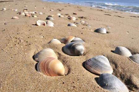 sea shell in nature ocean sand vacation beach