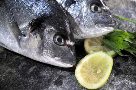 gilthead sparus aurata fish in kitchen food preparation  photo
