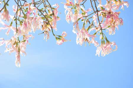 beauty flower background  photo