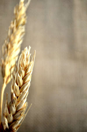 cereal wheat close up view  Stock Photo