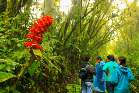 Red flower and lianas in Monteverde, Costa Rica