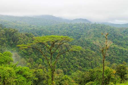 mountain jungle in central america