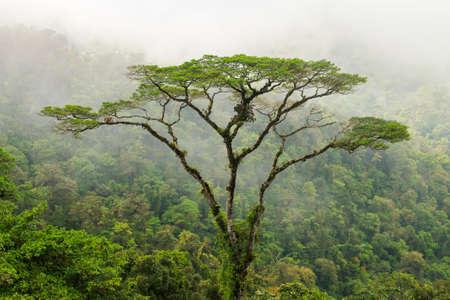 tall tropical tree