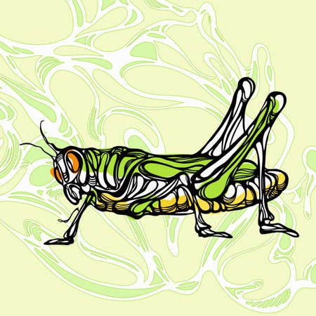 locust: Colorful illustration of grasshopper