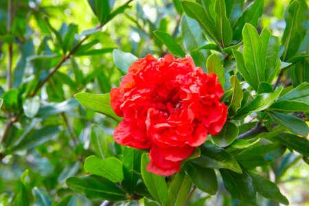 red flower grenade on green background